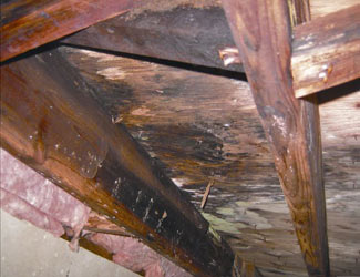 mold and rot in a Florence crawl space