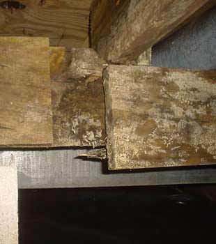 Extensive basement rot found in Sumter by Best Home & Property Services